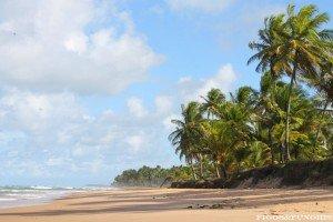 Bahia_Figos&Funghis