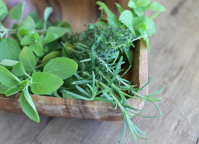 dica ervas frescas
